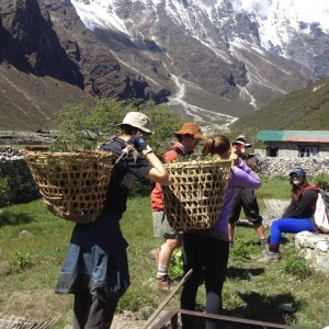 Rovers carrying seedlings for plantation